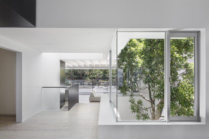 Wyer-Co_Beachside-Garden_Interior-Atrium-Features-Ficus-Hillii
