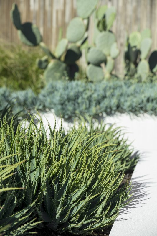 Wyer-Co_Beachside-Garden_Mass-Planted-Succulents-Coastal-Garden