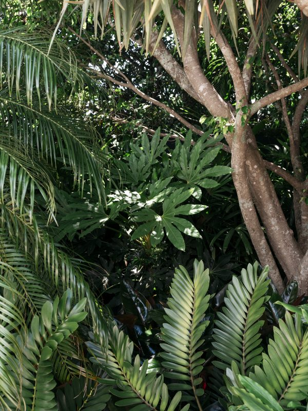 Point-Piper-Enclave_Jungle-Inspired-Plant-Palette